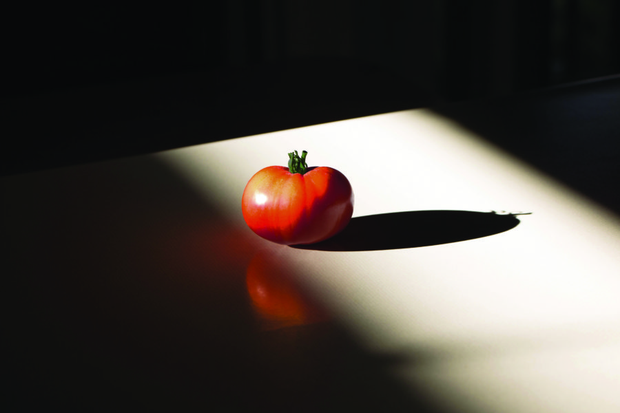 Making the Modern Tomato